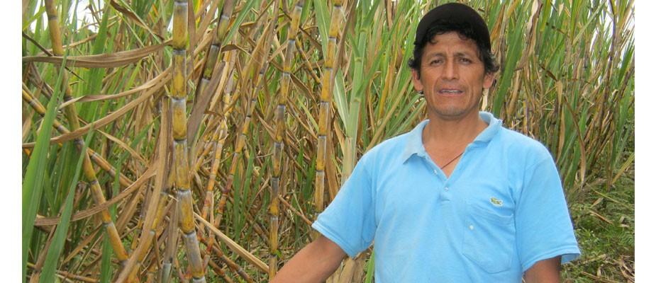 Producteur de canne à sucre